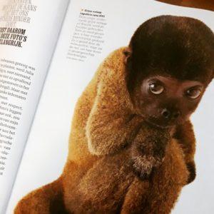 Vertaling artikel 'Bijna weg', National Geographic Magazine oktober 2019.